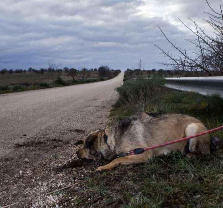 Día Mundial contra el Abandono de Animales: el coronavirus complica la situación en España
