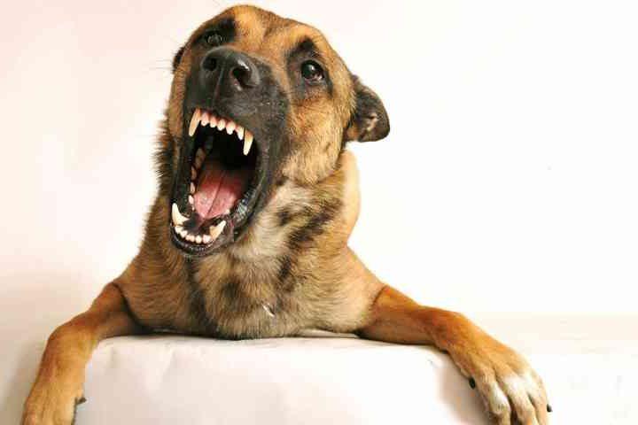 ¿Por qué mi perro es agresivo? Adiestrar perro conflictivo
